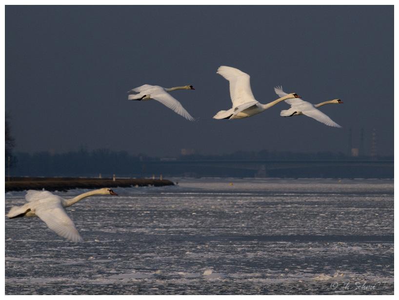 Discussions sur le thème et photos hors concours des mois de janvier et février 2012 - Page 3 P2105164