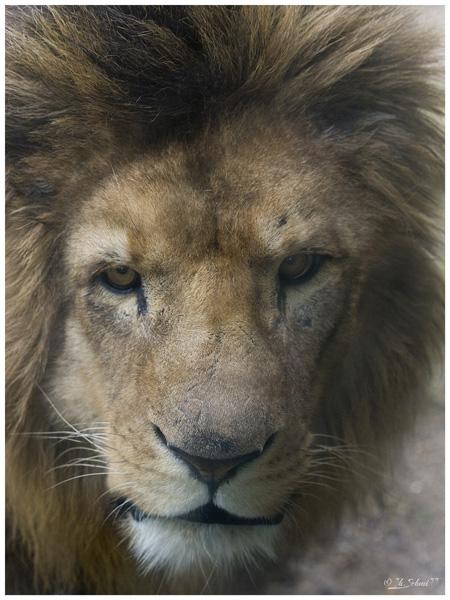 Portraits de Narnia et du livre de la jungle P4245752